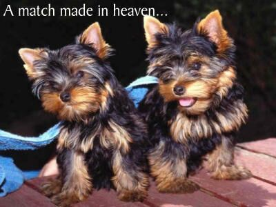 puppies01.jpg