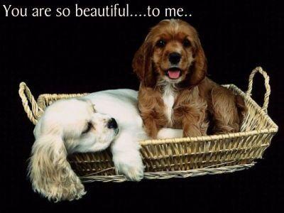 puppies03.jpg