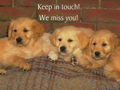 puppies05.jpg