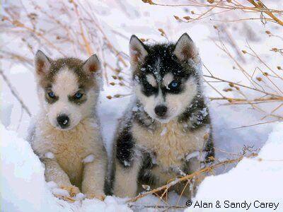 puppies09.jpg