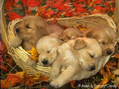 puppies11.jpg