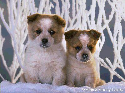 puppies12.jpg