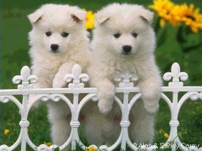puppies13.jpg