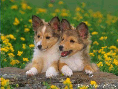 puppies14.jpg