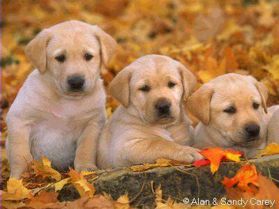 puppies18.jpg