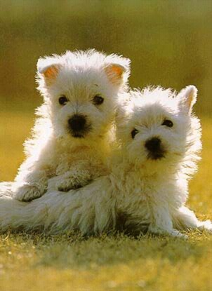 puppies35.jpg