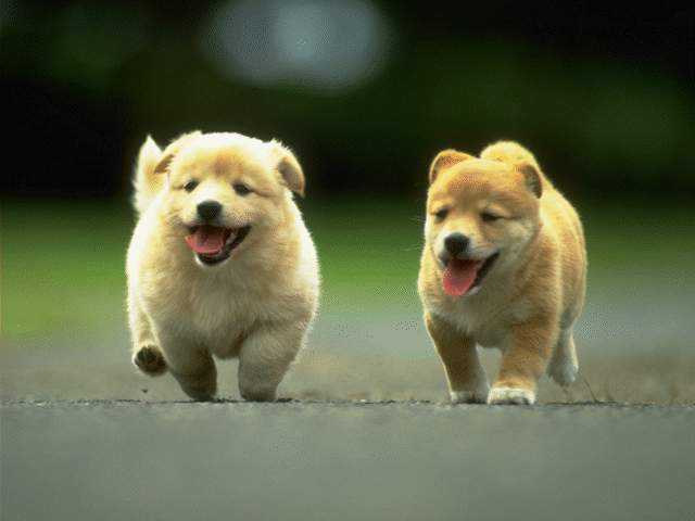 puppies37.jpg