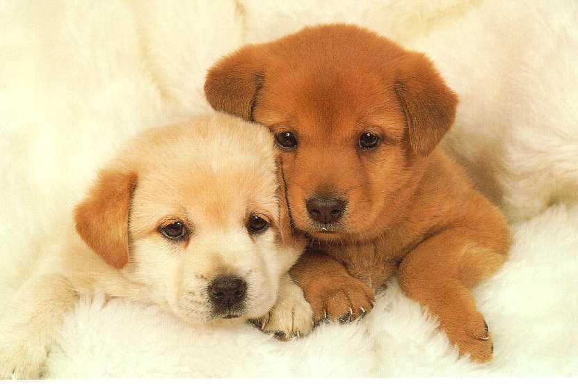 puppies38.jpg