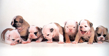 puppies44.jpg
