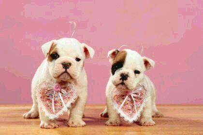 puppies48.jpg