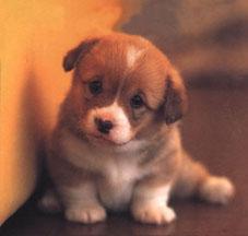 puppies54.jpg